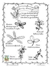 Herbal Roots Zine Freebies