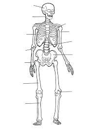 Human Bone Coloring Pages Body Bones Coloring Pages Human Bones
