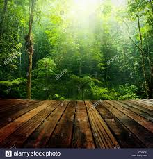 wooden floor perspective and green forest with ray of light light wood o5 perspective