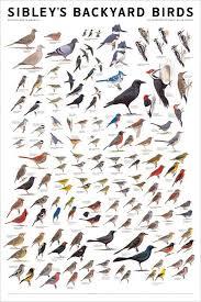 Identification Charts Bird Poster Birds Bird Identification