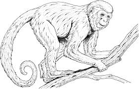 Small Picture Coloring Pages of Monkeys Printable Activity Shelter