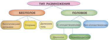Понятие размножения Биология Реферат доклад сообщение  Общая схема классификации типов размножения живых организмов