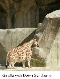 Image of: Cute Funny Down Syndrome And Giraffe Giraffe With Down Syndrome Funny Giraffe With Down Syndrome Funny Meme On Meme