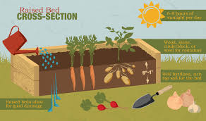 building a raised bed garden. Raised Bed Cross-Section Building A Garden