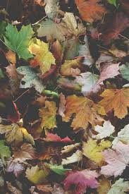 wallpaper iphone 6 tumblr fall.  Iphone Autumn Leaves And Fall Image In Wallpaper Iphone 6 Tumblr Fall L
