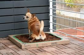 dogs bathroom grass. dogs love bark potty. like grass bathroom