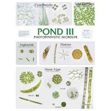 Chart Pond Life Iii