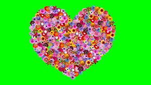 love heart formation with cute flowers greenscreen animation hd