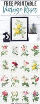 23 Best Vintage Botanical Prints Images Botanical Prints