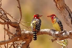 Резултат с изображение за Национален парк Маняра