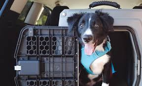 Designed 4 Dogs Gunner Kennels Review Crash Tested Travel Crate For