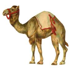 Image result for CAMEL