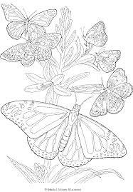butterfly coloring book printable.  Printable Free Printable Adult Butterfly Coloring Page Inside Book Printable Y