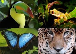 amazon river animals and plants. Amazon Rainforest Fauna And River Animals Plants