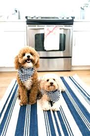 best rug for dogs area rugs as home depot faze dog ran away prank