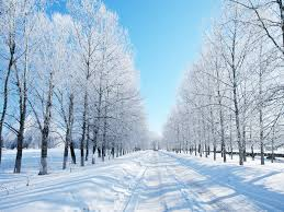 Image result for winter picture
