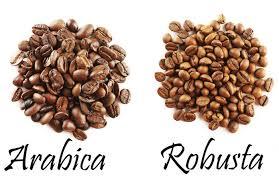 Kết quả hình ảnh cho coffee robusta plant