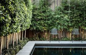 View in gallery Bamboo adds greenery to a poolside fence