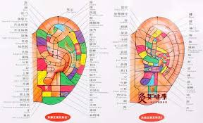 Chinese Ear Chart Us 9 85 Chart Of The Ear Reflective Zone Health Therapy Massage Acupuncture Acupoints Medical Study 68 48cm Chinese English Waterproof In Massage