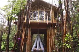 Tree House Photos Dreamy Tropical Tree House Treehouses For Rent In Fern Forest