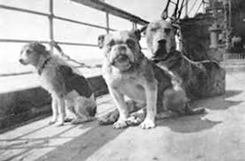 Animals aboard the Titanic - Wikipedia