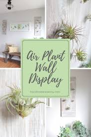 diy air plant wall display
