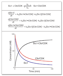 a simple example of mathematical modeling a an association dissociation reaction between