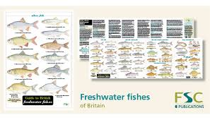 Freshwater Fish Identification Chart Fsc Fold Out Id Chart Freshwater Fish Identification Chart