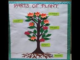 Science Project Chart Work Parts Of Plant Model For Students Easy Model For Kids Science Model