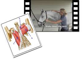 Equinology Health Care Courses Certification For Equine