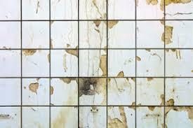 bathroom tile mold. Mold On Bathroom Tile