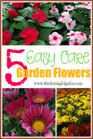 5 easy care flowers that your can plant in your garden gardening flowers