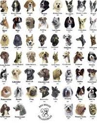 List Of Dog Breeds Alphabetical Dog Breed List Dog