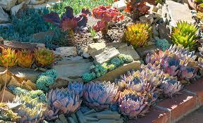 desert garden ideas. Interesting Desert Desert Garden Ideas With Desert Garden Ideas T