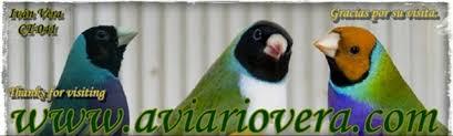 Aviario Vera - Home   Facebook