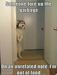 Spot the guilty dog | ImgLuLz - Funny Pictures, MEME, LOL and ... via Relatably.com