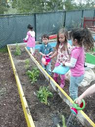 3 sisters gardening with teacher ron at la costa valley preschool and kindergarten