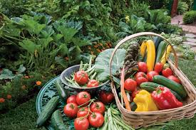 garden food. Home Gardening Is The Answer To Many Of Our Food Problems - Live Trading News Garden