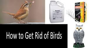 how to get rid of birds top 17 best