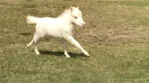 white baby horses playing. Unique Playing Intended White Baby Horses Playing YouTube