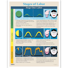 Phases Of Labor Chart Phases And Stages Of Labor Tear Pad