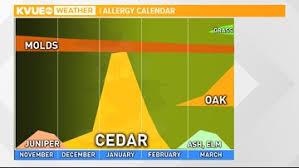 Austin Allergy Season Chart Cedar Season Has Officially Started In Central Texas Kvue Com