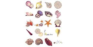 Seashells Design Serene Seashells Embroidery Designs By Amazing Designs These