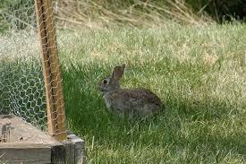 rabbit proof garden fencing lovetoknow