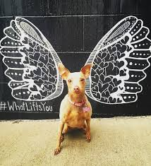 whatliftsyou wings mural source missaphrah source owenhowell