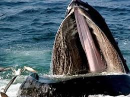 symbiotic relationships symbiotic relationship between humpback whales and marine birds