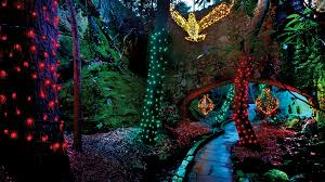 rock city s enchanted garden of lights trail