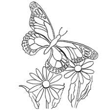 Do you know where butterflies come from? Top 50 Free Printable Butterfly Coloring Pages Online