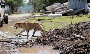 latest victim of texas floods identified two kids missing nbc news image texas flooding
