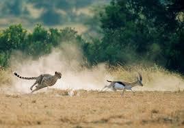 Image result for tourist picture upload in masai mara